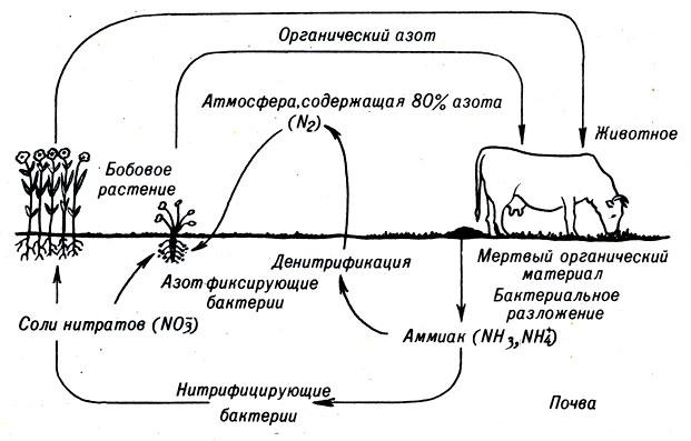 составить схему круговорота кислорода